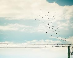 Birds on a wire flock of birds photography 8x8 by mylittlepixels