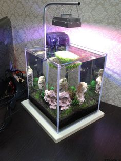 Wonderful_aquariums-ww (2)
