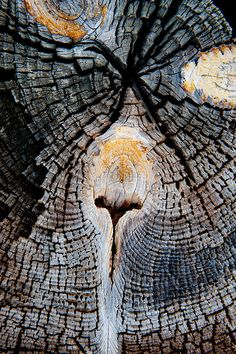 wood texture http://johnpirilloauthor.blogspot.com/