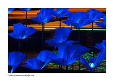 """Amsterdam Light Festival. """"On the wings of freedom"""" detail, by Aether & Hemera (Italy)."""