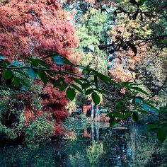 In questa giornata uggiosa ☔️ ricordiamo i colori dell'autunno con questo scatto di @_laemma_ (buon sabato😊) __________________________________ #parcoducos #brescia #autumn #autumnweather #leaves #season #walking #lake #park #trees #nature #naturelovers #water #reflex #atlantediviaggio #movingculturebrescia #autumn🍁 #autumnleaves #igersbrescia #visitbrescia