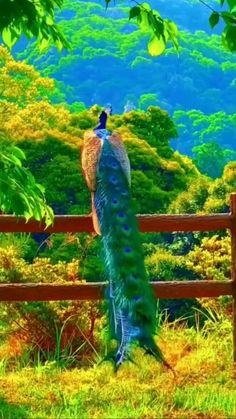 Beautiful Photos Of Nature, Most Beautiful Animals, Beautiful Gif, Amazing Nature, Beautiful Birds, Beautiful Creatures, Beautiful Places, Nature Gif, Nature Videos