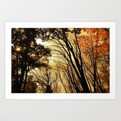 Autumn Boughs Art Print by Mark Giarrusso - $15.60