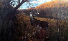 This print is signed and numbered with a certificate of authenticity and is available unframed in an image size of Hunting Art, Deer Hunting, Hunting Stuff, Bambi, Whitetail Deer Pictures, Deer Pics, Dangerous Animals, Strange Animals, Rare Animals
