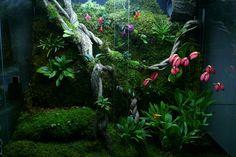 Orchidarium. Mike Leone on OrchidsForum