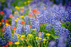 Selecting the Right Wildflowers | Stretcher.com - Staying with what's native to your region
