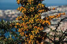 The amazing island of Madeira in October & November. www.rohinie.eu/ag…