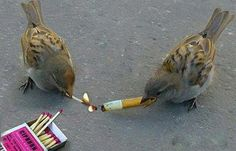 Chain Smoking Birds Nature is crazy.