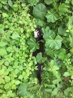 cats of Spetses Cats, Gatos, Cat, Kitty, Kitty Cats