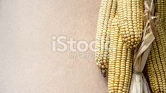 Ear of corn background Royalty Free Stock Photo - http://www.istockphoto.com/photo/ear-of-corn-background-46852616?st=897a02a