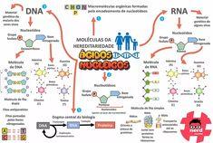 Mapas mentais - Biologia Medicine Notes, Medicine Student, Dna E Rna, Mental Map, Bio Art, Pretty Notes, Biochemistry, Study Notes, Student Life