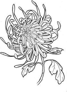 watercolour chrysanthemum line drawing - Google Search