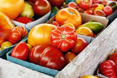 Tomatoes, tomatoes, ,tomatoes