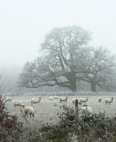 britain-land-of-hope-and-glory: Savernake Forest, Wiltshire. By The Wessex Reiver