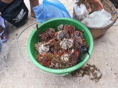 Seafood delicacy's in MoalBoal, Cebu Cebu, Seafood, Stuffed Mushrooms, Vegetables, Easy, Sea Food, Stuff Mushrooms, Vegetable Recipes, Veggies
