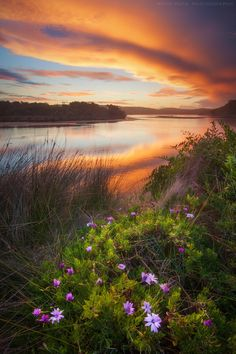 Daisies On The Lake || DALMENY || AUSTRALIA by Rhys Pope on 500px