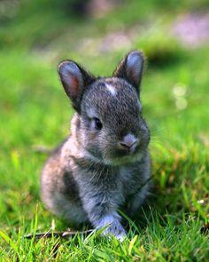 un petit lapin dans les herbes!