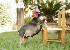 This Pregnant Dog Had Her Own Maternity Shoot And The Photos Are Priceless
