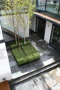 one of these trees would look great in tiny courtyard, shadowing the fake lawn underneath.