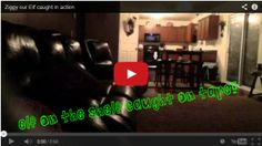 Elf on the Shelf caught on tape!  Video is TOO CUTE!