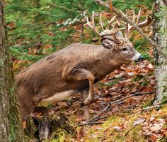 Photo by Bill Kinney If you want to target mature bucks, the first step is to realize that older deer don't behave like younger ones. The second step is to change your hunting strategy accordingly.