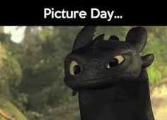 Image result for how to train a dragon funny quotes