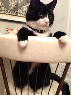 Calvino surveying the kitchen.
