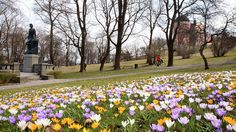 Beautiful image of Spring in Sweden by Tonyfoster, via Flickr