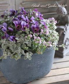 All About Container Gardening - Urban Gardening Container Flowers, Container Plants, Container Gardening, Urban Gardening, Green Flowers, Beautiful Flowers, Outdoor Flowers, Beautiful Flower Arrangements, Garden Planning
