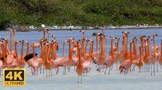 Tauchparadies Bonaire (4K DOKU 2016)