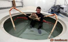 The giant spider crab is said to be settling into life at the Sea Life Centre. Unusual Animals, Rare Animals, Animals And Pets, Strange Animals, Animals Sea, Weird Creatures, Sea Creatures, Big Crab, Vida Animal
