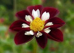Bellas flores para alegrarnos | Cuidar de tus plantas es facilisimo.com