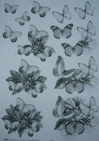3D mustavalkoinen perhoset