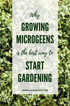 Why Growing Microgre