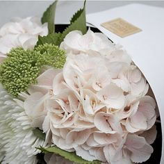 Bloom Social Instagram | blooms of the day | bloomsocial.nz