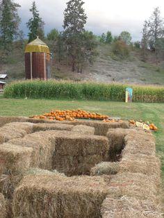 2009 - haymaze, pumpkins, corn maze and the old barn at McMillan Farms. Corn Maze, Farms, Pumpkins, Old Things, Outdoor, Outdoors, Homesteads, Pumpkin, Outdoor Games