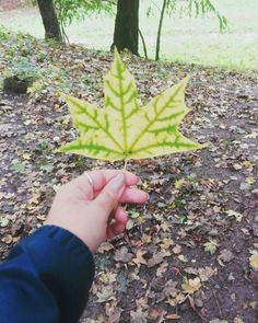 #leaf #fall #autumn #love