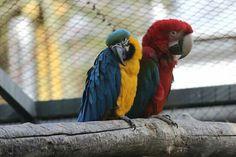 Nyíregyháza állatpark