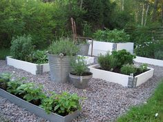 Using a mix of containers and raised beds to make vegetable garden more attractive. white raised bed with galvanized buckets and gravel, beautiful garden Container Gardening, Garden, Outdoor Garden, Garden Landscaping, Plants, Backyard Garden, Urban Garden, Raised Garden, Outdoor Gardens
