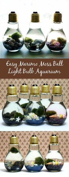 These easy Marimo moss ball DIY light bulb aquariums make a great home for tiny Japanese Marimo moss balls and are super cute as homemade gifts or DIY party favors!