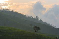 'Heaven On Earth' by Subodh Shetty on 500px   #Srilanka #NuwaraEliya, Tea, Plantations, Estates, Nature, Greenery, travel, photography