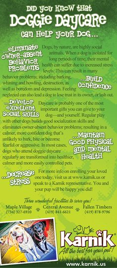 Karnik - Doggie Daycare Rack Card by Clint Doerfler, via Behance