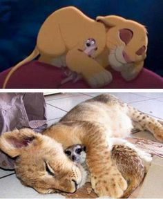 Real Simba and Timon