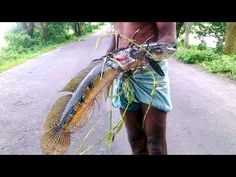Primitive Technology : fish hunting methods and how to catch fish.