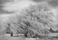 http://www.photographyblogger.net/wp-content/uploads/2014/01/Willow-Tree-11.jpg