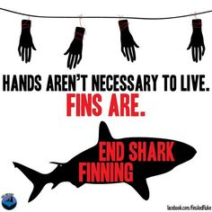 Shark finning is absolutely disgraceful!