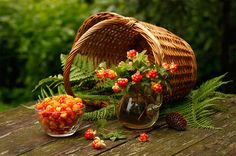 Cloudberry is the rarest berry and at all times in Russia fresh or soaked cloudberry was the most precious northern berry served for the czar table. In pre-revolutionary Russia cloudberry was well-known everywhere. Cloudberry kvasses and waters were very popular. Even nowadays in the north it is called the Royal berry. #russianfood #traditions