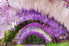 Bildresultat för flower park