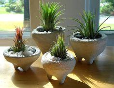 OMG! I am in love with these pots!!!!!!   ZEN Mini Concrete Pot Terrarium with Peanut Air by My Zen
