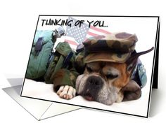 Thinking of you Military Boxer Dog card  Inside of Card is customizeable for you to add your own special message. Photography: Ritmo Boxer Designs